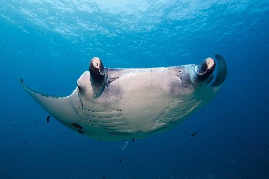 ProDivers Underwater Images06 e1601121481482