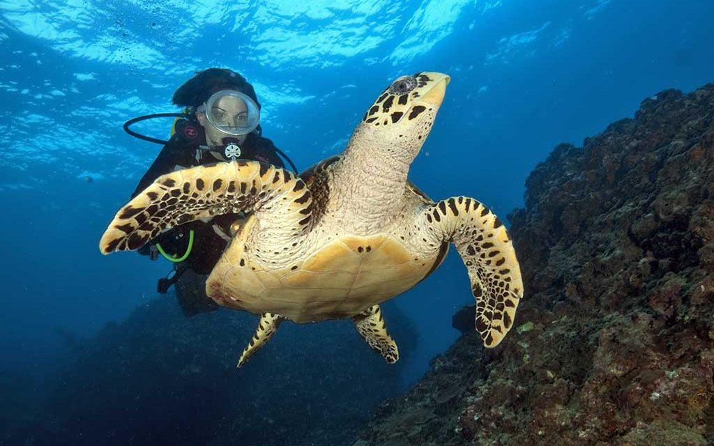 https://as-tauchreisen.de/wp-content/uploads/Sea-Bees-Diving-Khao-Lak-11-1024x640.jpg
