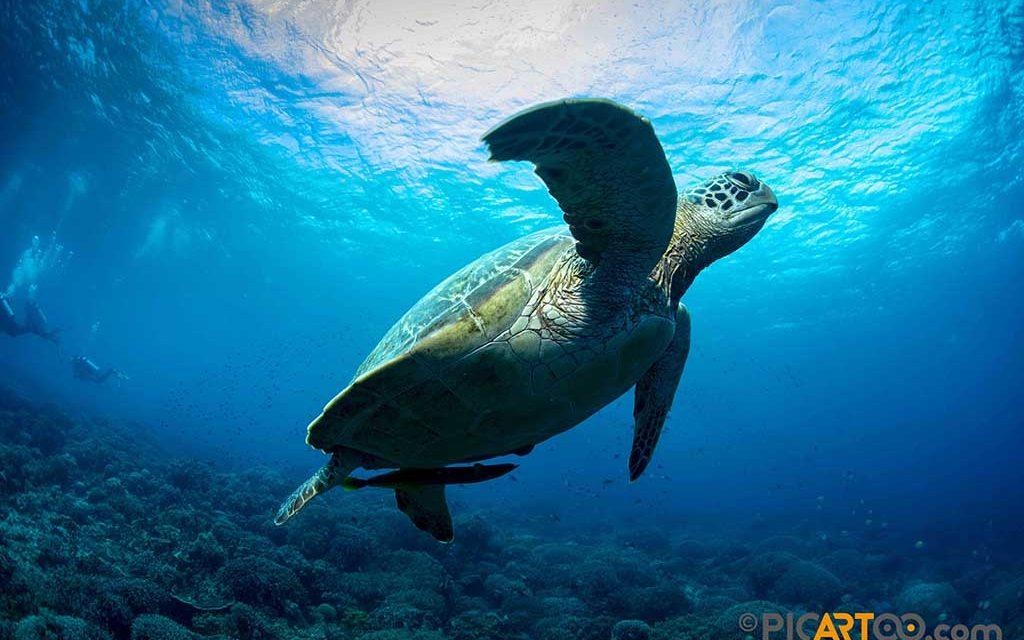 https://as-tauchreisen.de/wp-content/uploads/Visayas-Safaris04-1024x640.jpg