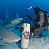 bullenhaie playa del carmen 01 mexiko reisebaustein yucatan dive trek
