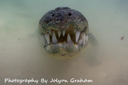 crocs 02 banco chinchorro yucatan dive trek jolyon graham