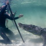 crocs 03 banco chinchorro yucatan dive trek jolyon graham