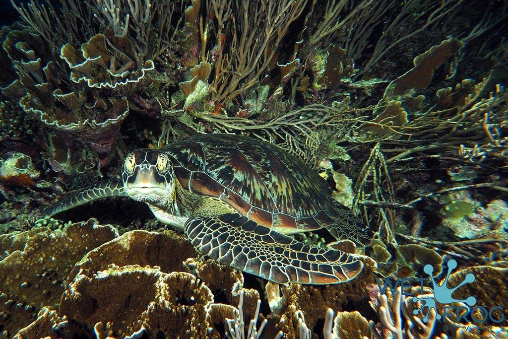 index komodo wet frog divers 3